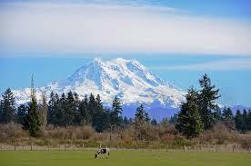 Picture of Mt. Rainier